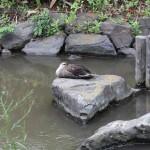 一之江境川親水公園(東京都江戸川区)